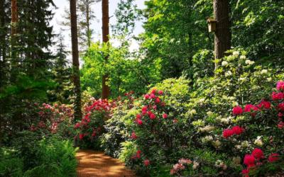 Verkkojulkaisu Kulttuuritoimitus kirjoitti arboretumista